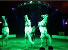 Součástí Národního cirkusu Originál Berousek jsou i koně.