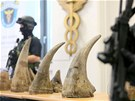 Příslušnící celní správy zadrželi pašované nosorožčí rohy, které mají na černém