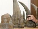 Policisté a celníci dopadli gang, který z Afriky pašoval 24 rohů nosorožců. Jejich hodnota se odhaduje na 100 milionů korun.. (23. července 2013)