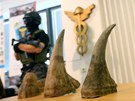 Policisté a celníci dopadli gang, který z Afriky pašoval 24 rohů nosorožců.