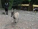 Snímek z prvního dne provozu euroasijské části olomouckého safari. Žije v ní na