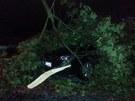 Ve�ern� bou�ka v pond�l� pol�mala v Jihlav� stovky strom�. Ty po�kodily i auta