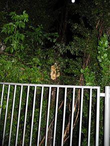 Silný vichr v neděli večer vyvrátil strom u stadionu zbrojovky. Padající větve
