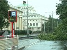 Spadlý strom v Praze-Podolí (4.8.2013)