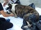 Pes měl velkou část srsti pokrytou asfaltem, čekalo ho stříhání.