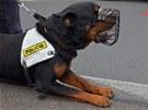 Odpočinek po dobře vykonané práci. Policejní pes našel řidiče, jak vyspává ve