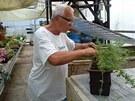 Lebišova oblíbená bylinka kotvičník vydrží v samozavlažovacím truhlíku i ve...