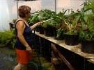 Když ve sklenících stoupla teplota přes 40 stupňů, zahradnictví mělo zavřeno,...