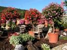 Samozavlažovací truhlíky umožňují pěstovat i v našich podmínkách stejně krásné...