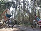 Cestou lesem plným polomů se dá narazit i na cyklisty, někteří o žádném zákazu