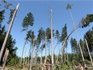 Zákaz vstupu do lesů vyhlásila některá místa na Žďársku a Jihlavsku. Důvodem je