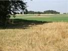 Pytláci si vyhlédli dvě jalovice na pastvině ve výseku lesa mezi Budišovem a