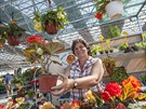 Letní Floria v Kroměříži nabízí spoustu rostlin, například mečíků a kaktusů....