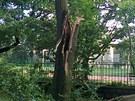 Ulomená větev po silné bouři v ulici Na Okraji za základní školou na Petřinách