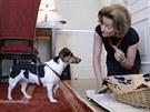 Za košík, pokrývku, misky, postroj, vodítko a náhubek si majitelé psů připlatí...