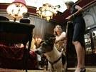 Po hotelu nesmí psi pobíhat, ale musí být na vodítku. Každý host si to může...