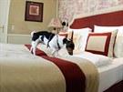 Potřebám psů je v Hotelu Sacher přizbůsobeno 40 pokojů.