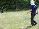Odchyt pštrosa u Petřvaldu. Hasiči nahánějí ptáka s volejbalovou sítí. (11....