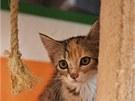 Největší kočičí útulek v zemi oslavil první rok. Dnes tam čtyřnohé klientky