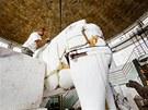 Modelář se vrhnul na mamuta s odhodláním důkladného plastického chirurga....