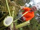 Sekáč bolševníku Martin Klepal ve čtvrtek likvidoval plevel v Sítinách u