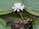Ve Sbírkových sklenících olomouckého Výstaviště Flora vykvetl jeden z