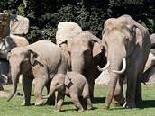 Rozdíl ve velikosti samic a samce Mekonga, který je největším zvířetem v zoo, je patrný na první pohled.