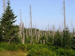 Obnova lesa pod Luzným