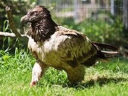 Bernd str�vila v Zoo Praha sedm t�dn�. Nyn� je p�ipravena vr�tit se do p��rody.