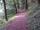 Závěr trati vede po asfaltu, jinak si užijete příjemné lesní cesty.