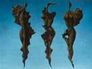 Franti�ek Muzika, T�i velk� larvy III v modr�, 1970