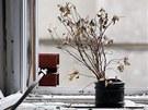 MEMENTO. Suchá květina na okně jedné z kanceláří v domě číslo 5 v pražské
