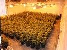 Trojice mužů pěstovala marihuanu v olomoucké bývalé průmyslové hale průmyslovým