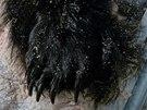 Části těla Medvěda hnědého, které celníci 22. září 2013 objevili na