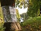 Povodí Labe chce pokácet stovky letitých stromů na hrázi Orlice v Hradci Králové