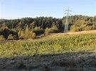 Muž si na Šumpersku vysázel na poli přes čtrnáct stovek rostlin konopí. Pokus