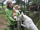 Psi - to je životní radost Evy Cenkové z Mokrých Lazců na Opavsku.