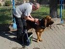 Psovod a jeho desetiletý bloodhound Forrest Gump