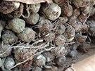 Čtyřicetitunový kontejner z Číny byl plný plesnivých, červy a brouky prolezlých