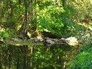 V brzkém odpolední se na klidné hladině říčky Krounky zrcadlí břehová zeleň.