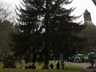 K�cen� v�no�n�ho stromu pro Prahu v Rataj�ch nad S�zavou.