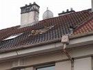 Pes vylezl střešním oknem a procházel se po střeše jednoho z hradeckých...
