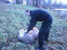 Zmatená ovce nemohla ven z Labe v Hradci Králové, strážník ji  vytáhl...