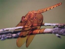 Dan Bárta také rád a dobře fotí, zvláště pak vážky.
