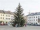 Tento krásný smrk po páteční vichřici už na náměstí v Moravské Třebové nestojí.