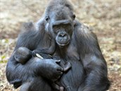 Samice Chelewa se svým druhým mládětem