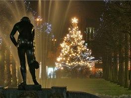 Karlovarský vánoční strom stojí na okraji Smetanových sadů u hlavní pošty.