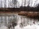 Kříženec zoufale čekal na záchranu uprostřed částečně zmrzlého rybníka.