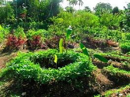 Část farmy podobající se klasické zahrádce. Vše je tu ale zelenější a roste...