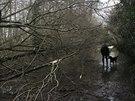 Meteorologové varují před příchodem dalších  lijáků a silného větru (26....